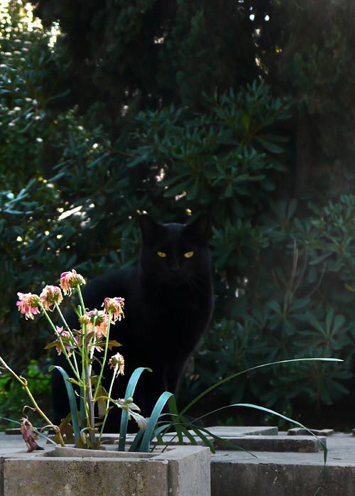 Gato discreto