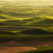 Palouse Dreaming