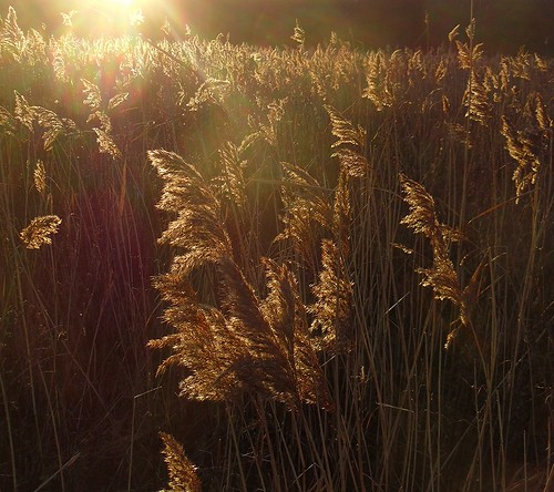 reeds sunlit doncaster southyorks