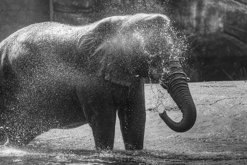 [animal] take a shower!