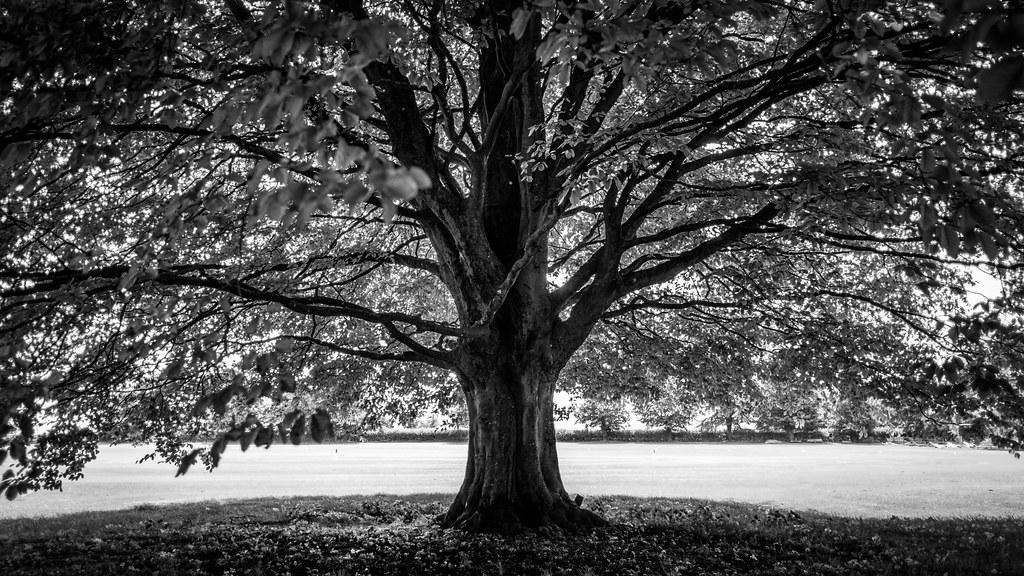 The Tree Avebury United Kingdom Black And White Photo Flickr