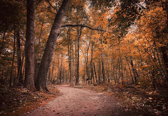 Lost in Autumn