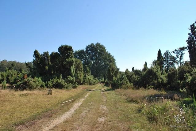 Holtwicker Heide