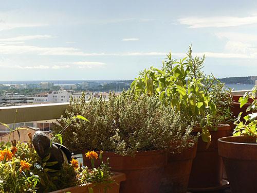 terrasse en fin d'été.jpg