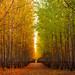 Seasons by Robert Gifford