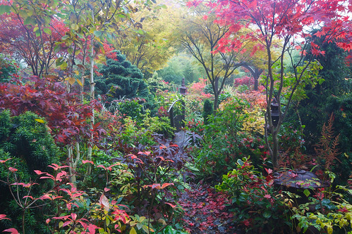 Our woodland lower garden after autumn rain