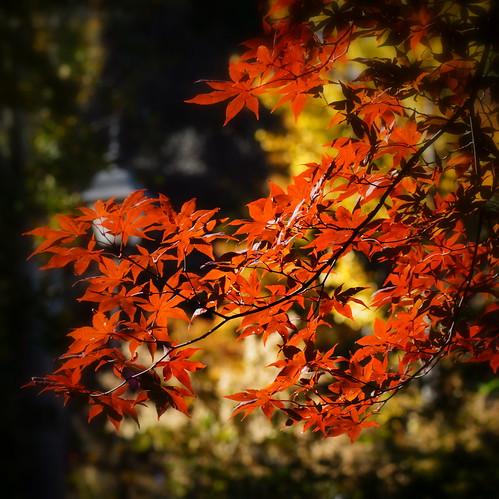 autumn trees color nature garden botanical bokeh ngc lewisginterbotanicalgarden blinkagain sonyslta65v