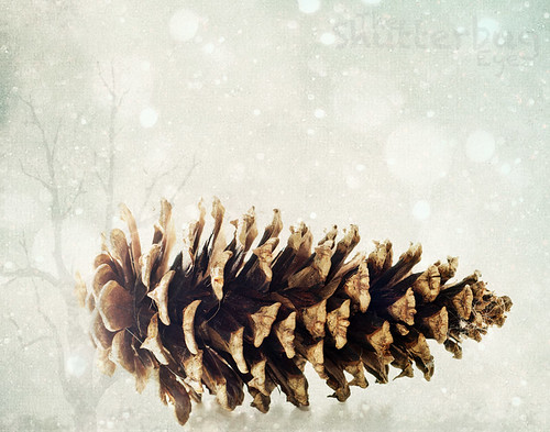 Winter Pinecone by The Shutterbug Eye™