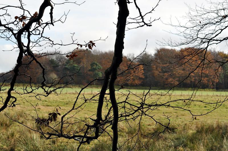 darwin forest 24
