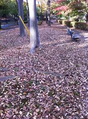 一足早い欅の落葉@都立桜ヶ丘公園