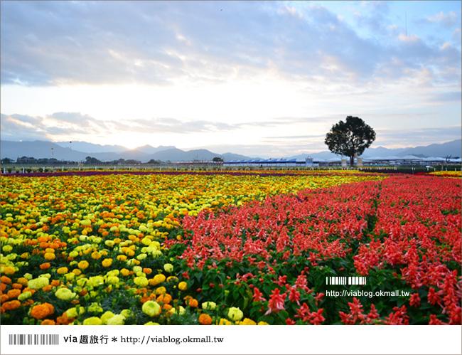 【新社花海2012】2012新社花海節活動介紹及交通資訊8-1