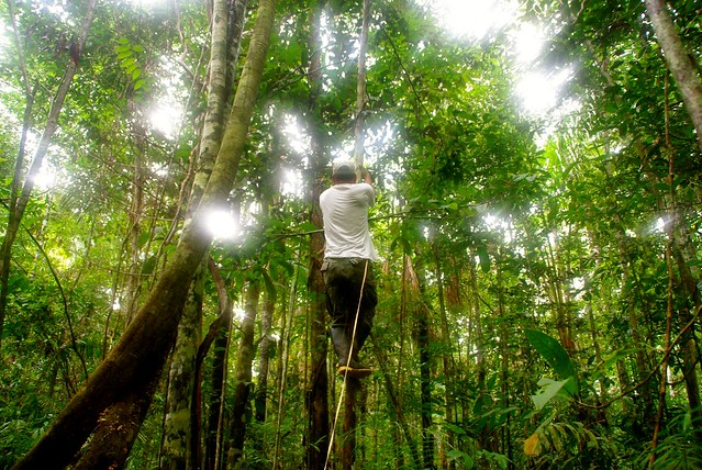 Josias climbing in the amazon