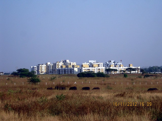 View of Vision Woods (Vision County) from Collina Kanhe