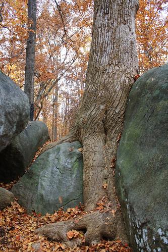 Tree/Rocks