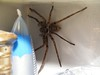 Bathroom Huntsman 003