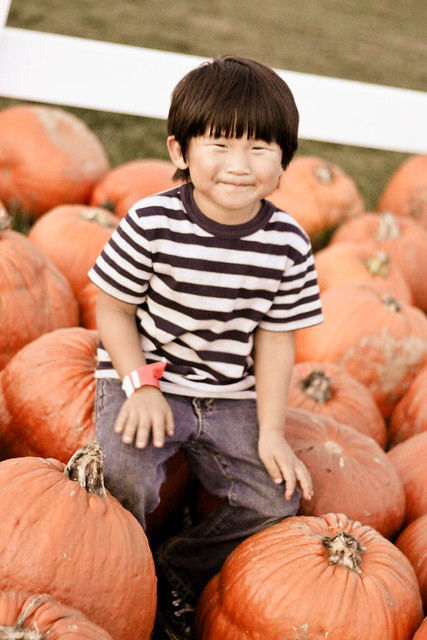 pumpkin patch_-34