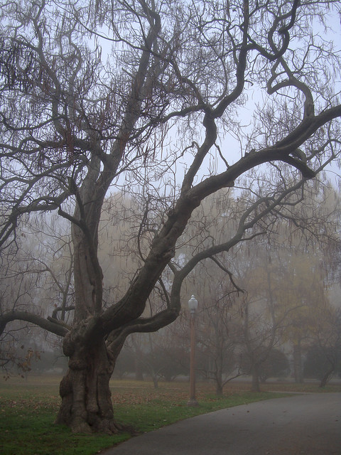 fog-03