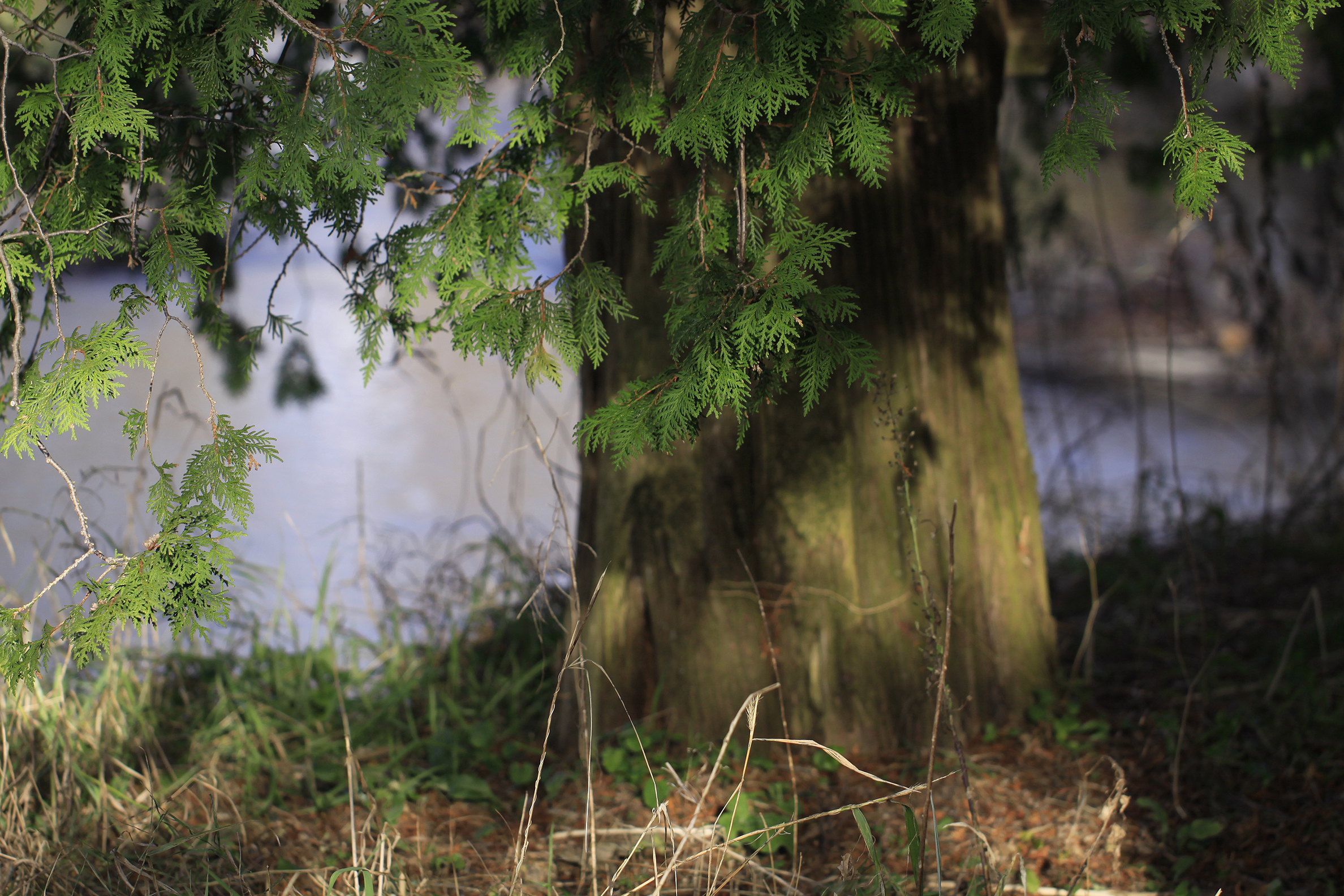 south side cedar
