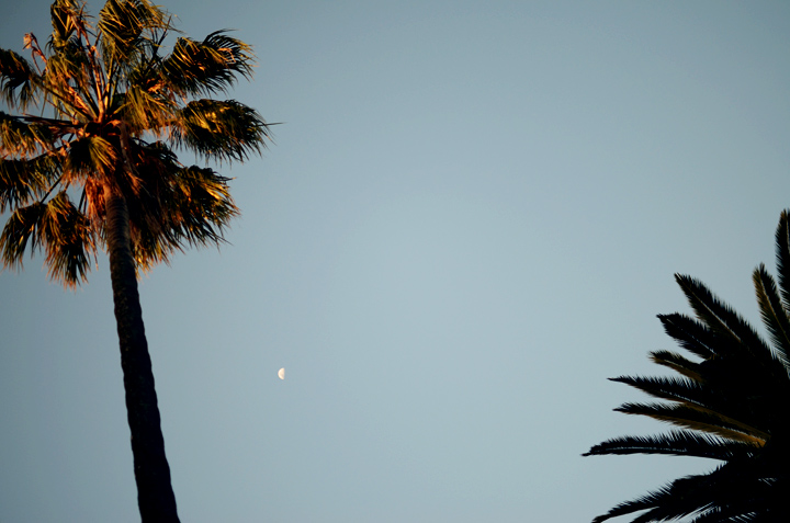 palm tree sunset moon