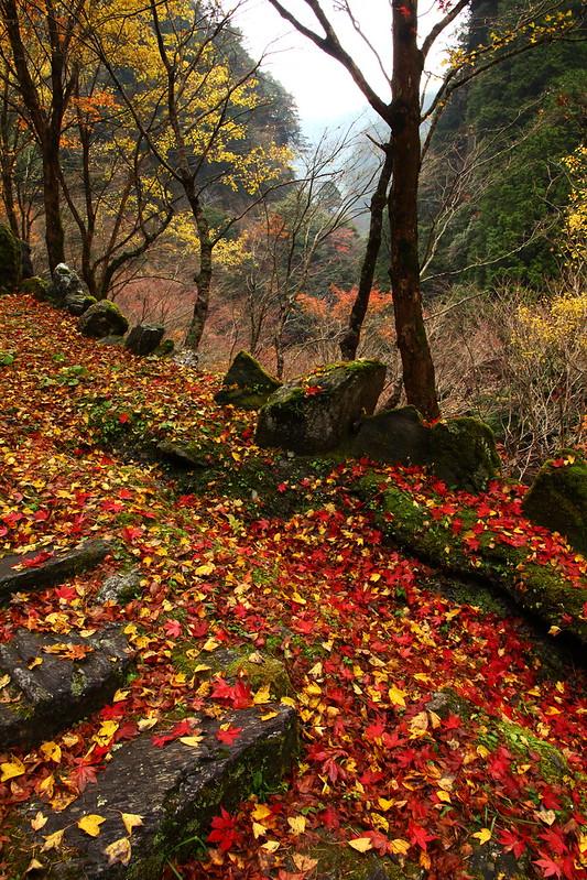IMG_4824_11-23 Yasui Valley