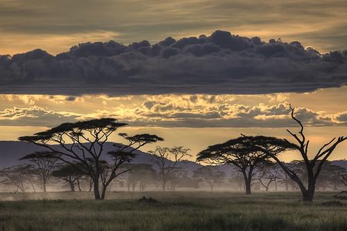 africa trees sunset beautiful fog clouds sunrise landscape photography safari photostory canoneos50d humantheme amnoneichelberg