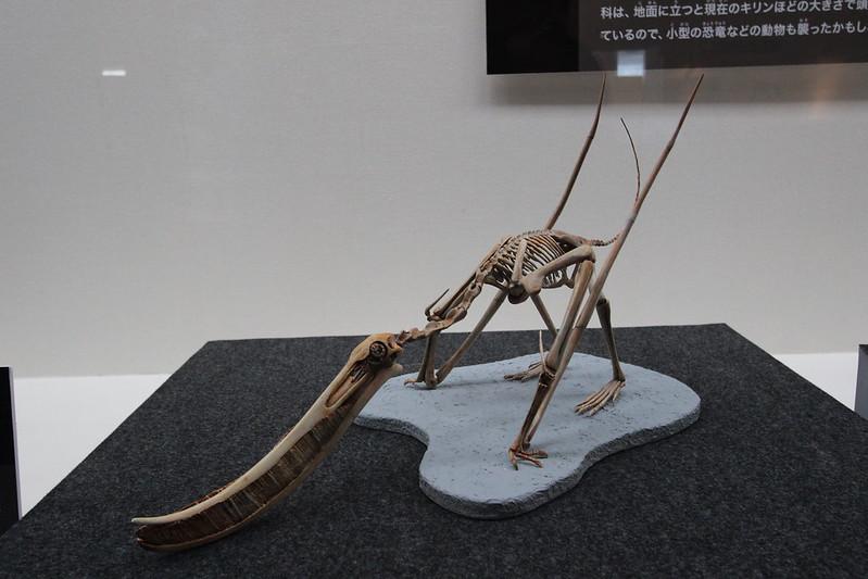 福井県立恐竜博物館 骨格模型