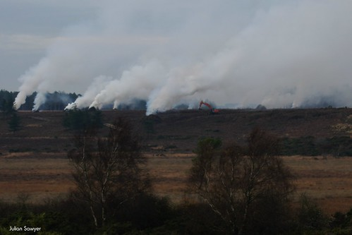 Slash & Burn by julian sawyer - Purbeck Footprints