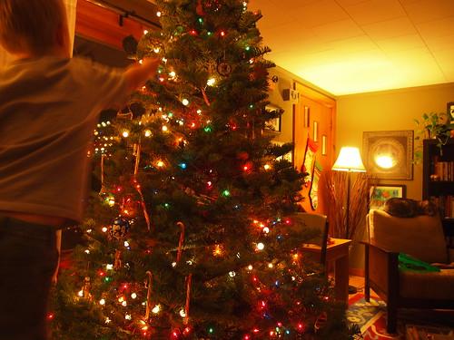 tree 012