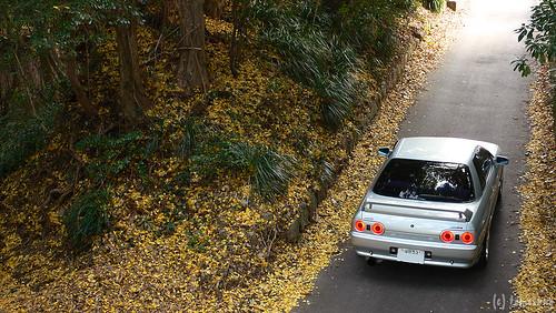 R32 in autumn color