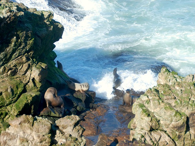 sea lions_0202