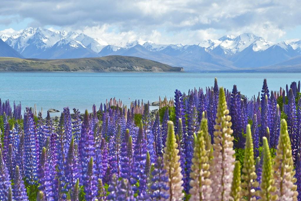 Lake Tekapo Mackenzie Country New Zealand Around Guides