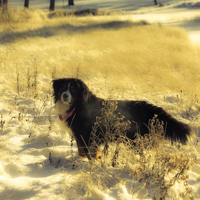Sur la rive de neige... tout de soleil... ma fidèle compagne...!!!