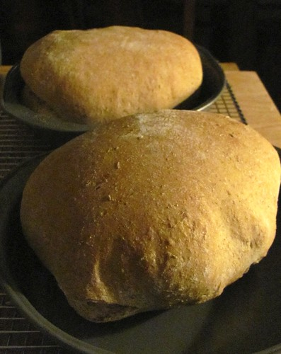 Breadmaker Caraway Rye Bread Recipe