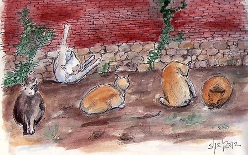 gatos detras de casa