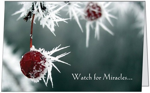 Chistmas Card 01 Front - Crabapples in Hoar Frost - Watch for Miracles