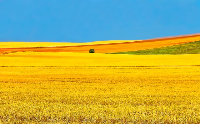 North Dakota Fields of Gold