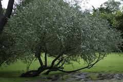 Nature during a rainy day   121216-1781-jikatu