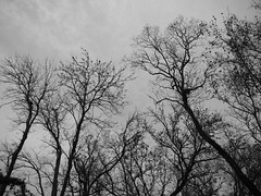 Baretrees in the park...