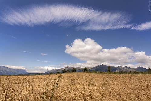 Clouds & Wheat