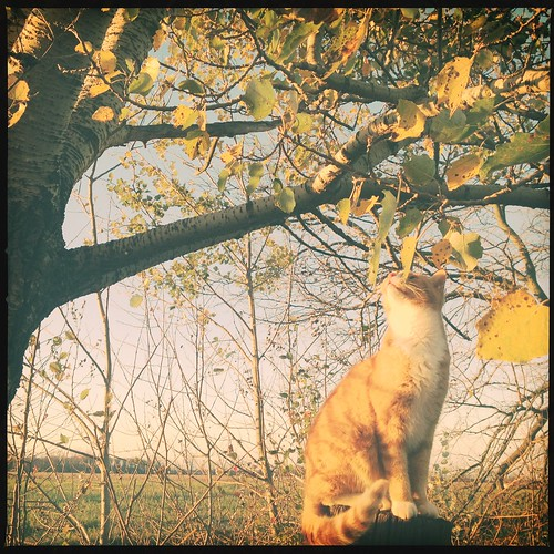 autumn light sky sun tree fall leaves yellow cat sunrise kitty bluesky meow goldenhour sunbeams iphone hipstamatic byvanessaray