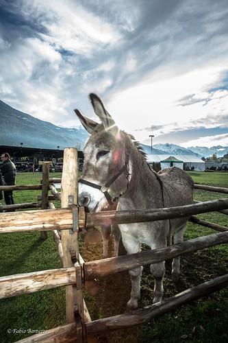 Foire des Alpes 2012