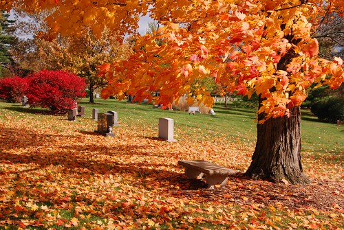 autumn fall nature colors cemetery leaves oakhill cincinnati oh mygearandme rememberthatmomentlevel1 rememberthatmomentlevel2 jennypansing