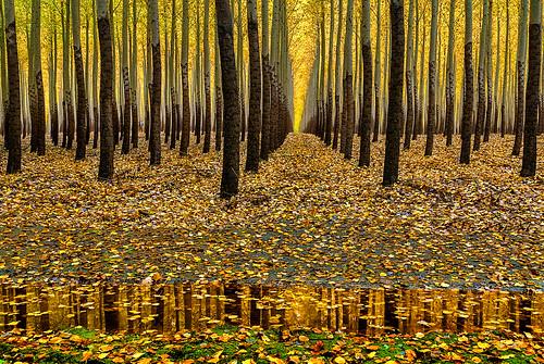 [フリー画像素材] 自然風景, 森林, 樹木, 紅葉・黄葉 ID:201211181200