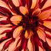 Flower @ Eden Project, Cornwall