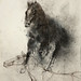馬11.水彩、木炭、紙本.62x48cm.2012