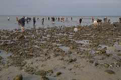20121014 - Oystering