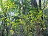 foglie gialle di luce