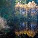 Une Deuxième Pression D'automne by Yoggibat