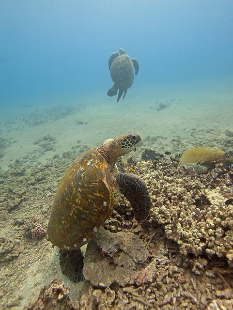 whole lotta turtles