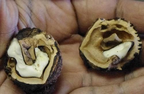 Black Walnut: A Favorite for Flavor - State Parks Blogs